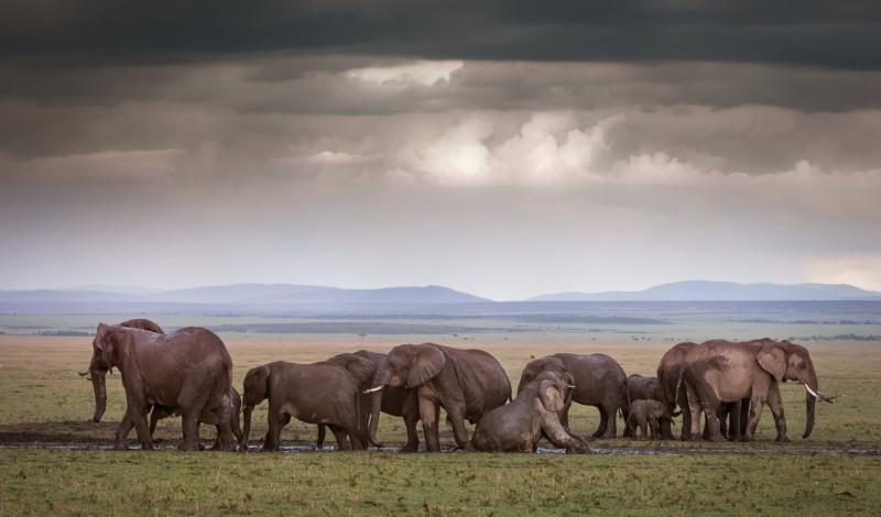 KENYA'DA SAFARİ TURU