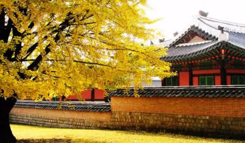 SAKURA'DA JAPONYA & KORE TURU | THY ile